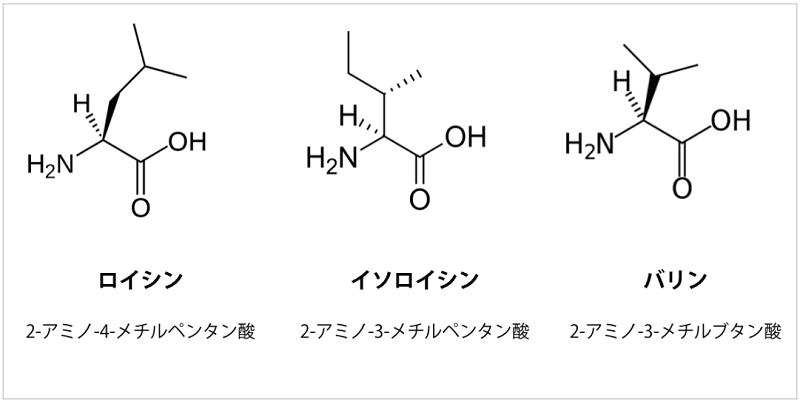 プロテインを選ぶポイントのBCAAアミノ酸とは