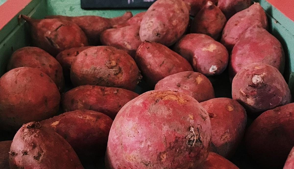 千葉県や茨城県で12月や1月が干し芋の旬のようです。